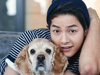 Song Joong Ki là ngôi sao phụ nữ Hàn 'thèm muốn'