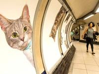 Hàng trăm chú mèo 'chiếm lĩnh' ga tàu điện ngầm tại London