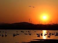 Tuyệt đẹp mùa di cư của chim thiên nga ở Trung Quốc