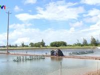 Đảm bảo cấp điện cho người dân nuôi tôm tại Bạc Liêu