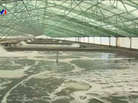 Hình thành Trung tâm nuôi tôm công nghệ cao ở Bạc Liêu