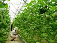 Nhiều DN Nhật Bản đầu tư vào nông nghiệp Việt Nam