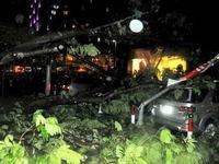 TP.HCM: Mưa lớn gây ngập đường, cây xanh ngã đổ đè phương tiện