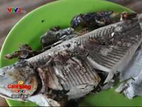 Đến Philippines thưởng thức món cá sữa nướng thơm ngon khó cưỡng