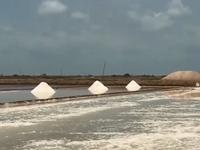TP.HCM: 95.000 tấn muối của diêm dân được đăng ký mua