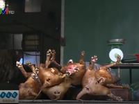 Cơ quan chức năng 'bối rối' khi kiểm tra chất lượng thịt chó