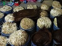 Bắt cơ sở sản xuất giá đỗ dùng hóa chất kích thích ở Đồng Nai