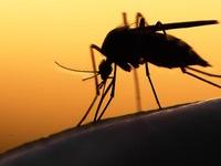 5 trường hợp nhiễm Zika, Bộ Y tế ráo riết giám sát