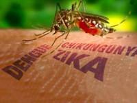 Tăng cường giám sát dịch bệnh do virus Zika tại TP.HCM
