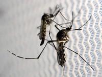 WHO: Virus Zika có nguy cơ lan rộng tại châu Á - Thái Bình Dương