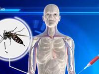 Các nước ASEAN và WHO họp bàn giải pháp chống bệnh do virus Zika