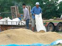 Năm 2017, Thái Lan xuất khẩu gạo dự báo vượt 10 triệu tấn
