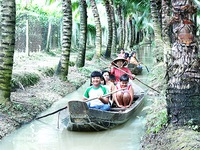 Trải nghiệm thú vị tại vườn dừa ở cù lao Tân Lộc, Cần Thơ