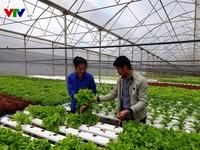 Lâm Đồng phát triển hướng đi mới - trồng rau thủy canh