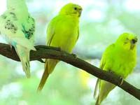 Đa dạng sắc màu Vườn chim Yang Bay, Khánh Hòa