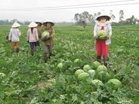 Nghệ An xây dựng gần 280 mô hình kinh tế trong nông nghiệp