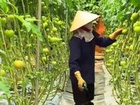 Nội địa hóa công nghệ cao hướng tới phát triển nông nghiệp bền vững