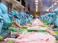 Kiểm soát sản phẩm cá da trơn - Giải pháp tối ưu để xuất khẩu sang Mỹ