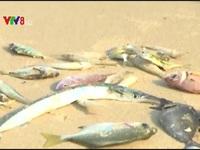 Quảng Trị: Chi trả 582 tỷ đồng bồi thường thiệt hại môi trường biển