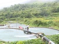 COVID-19 delays Sapa's salmon consumption