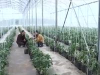 Nông nghiệp công nghệ cao mang lại tiềm năng phát triển du lịch