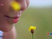 VTVTrip: Đến Đồng Tháp để chìm trong thảm hoa Hoàng đầu ấn rực rỡ