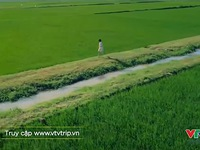 VTVTrip: Đi giữa mùa xanh của vùng quê lúa Thái Bình