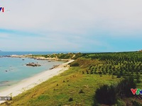 Cù Lao Câu, Bình Thuận: Miếng ngọc xanh nơi xứ cát