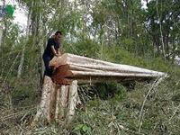 Sẽ khởi tố vụ phá rừng ở biên giới Gia Lai