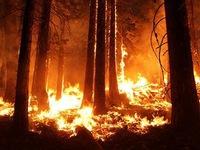 Cháy rừng trên diện rộng tại bang California của Mỹ