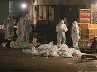 Trung Quốc đóng cửa các chợ gia cầm sống do dịch cúm