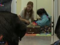 Chó hỗ trợ trẻ tự kỷ đi khám răng