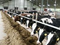 Nông dân châu Âu chật vật khi giá sữa quá thấp