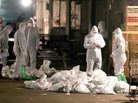 Dịch cúm A/H7N9 ở Trung Quốc bắt đầu giảm bớt