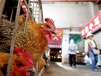 Cúm A/H7N9 từ Trung Quốc có nguy cơ xâm nhập vào Việt Nam