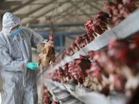 Thành lập 8 đội ứng phó nhanh khi phát hiện virus cúm A/H7N9