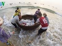 Lập 4 đoàn kiểm tra bồi thường thiệt hại sự cố môi trường biển