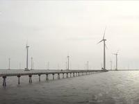 Tăng cường bảo vệ điện gió Bạc Liêu trước bão số 16
