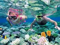 Khám phá lặn biển tại Nha Trang