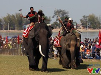 Đông đảo du khách đến xem lễ hội đua voi Tây Nguyên