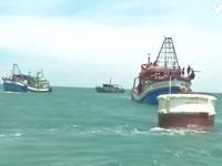 Quảng Trị bắt hai tàu cá Kiên Giang khai thác hải sản 'tận diệt' ven bờ