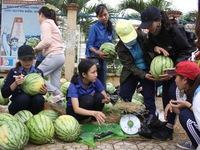 'Giải cứu' nông sản: Cần giải pháp căn cơ