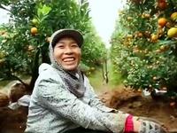 Xứ nhãn Hưng Yên - Một điểm du xuân mới cho dịp Tết