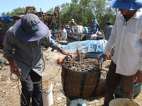 Món ngon từ mỏ vịt - Đặc sản dân dã vùng biển Tiền Giang