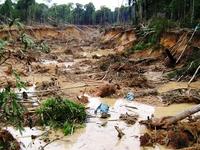 Nhức nhối nạn 'vàng tặc' ở Cajamarca - mỏ vàng lớn nhất Nam Mỹ