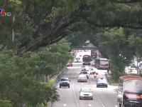 Quy hoạch không gian xanh, Singapore hướng tới xây dựng đất nước thành  khu vườn chung