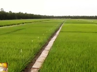 Sử dụng phân bón công nghệ cao giúp nông dân tăng lương