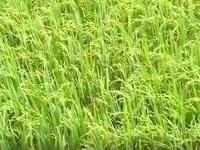 Đà Nẵng ứng dụng công nghệ cao trong nông nghiệp