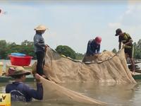 Người dân miền Tây vui với kéo lưới bắt cá mùa nước nổi