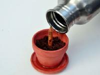 Bút chì có thể... nảy mầm thành cây khi cắm xuống đất